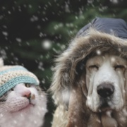 Winter Care for Outside Pets
